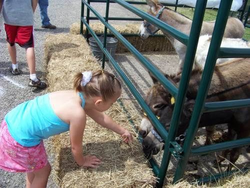 petting_zoo_tom_bean_03